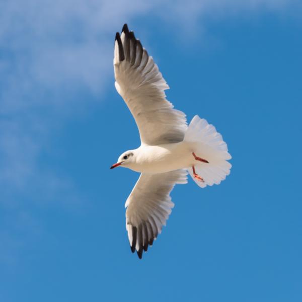 A seagull, Baltic Sea, Poland